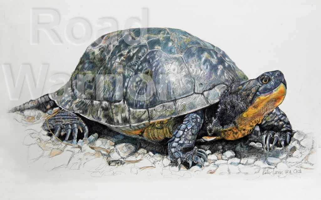 Road Warrior by Peter G S Large, Amherst Island artist
